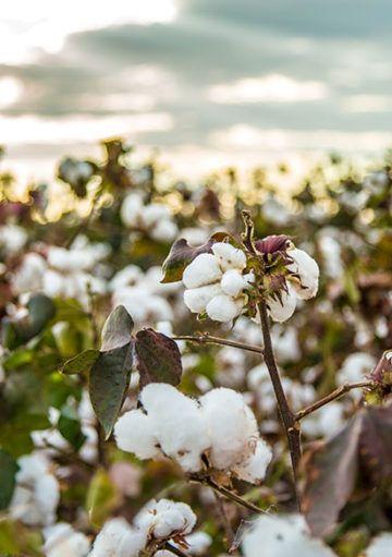 Por qué debes apostar por la ropa confeccionada con algodón orgánico