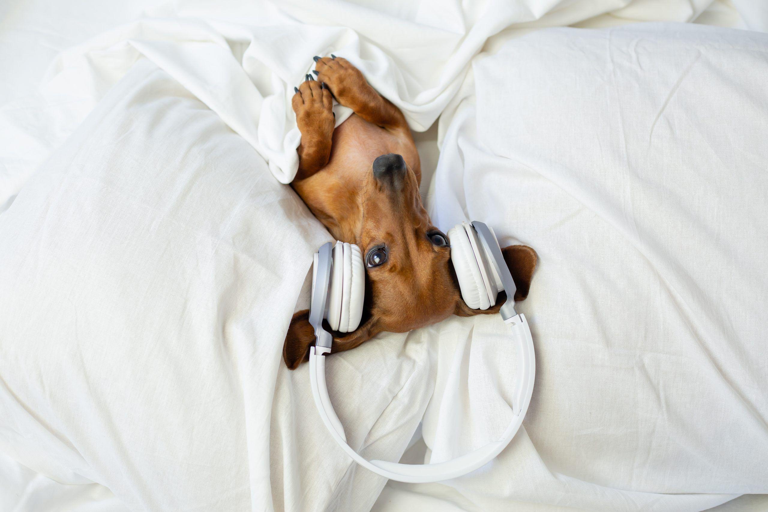Escucha bien, aquí tienes los auriculares más especiales del mercado